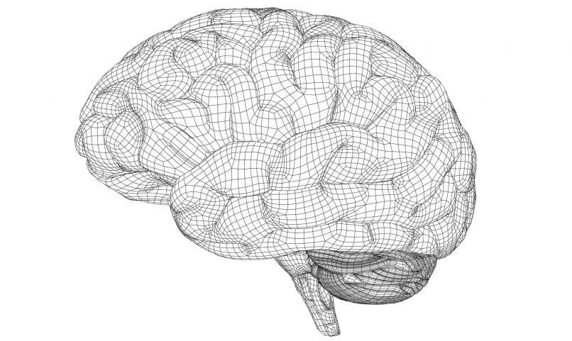 A polygonal wireframe of a brain